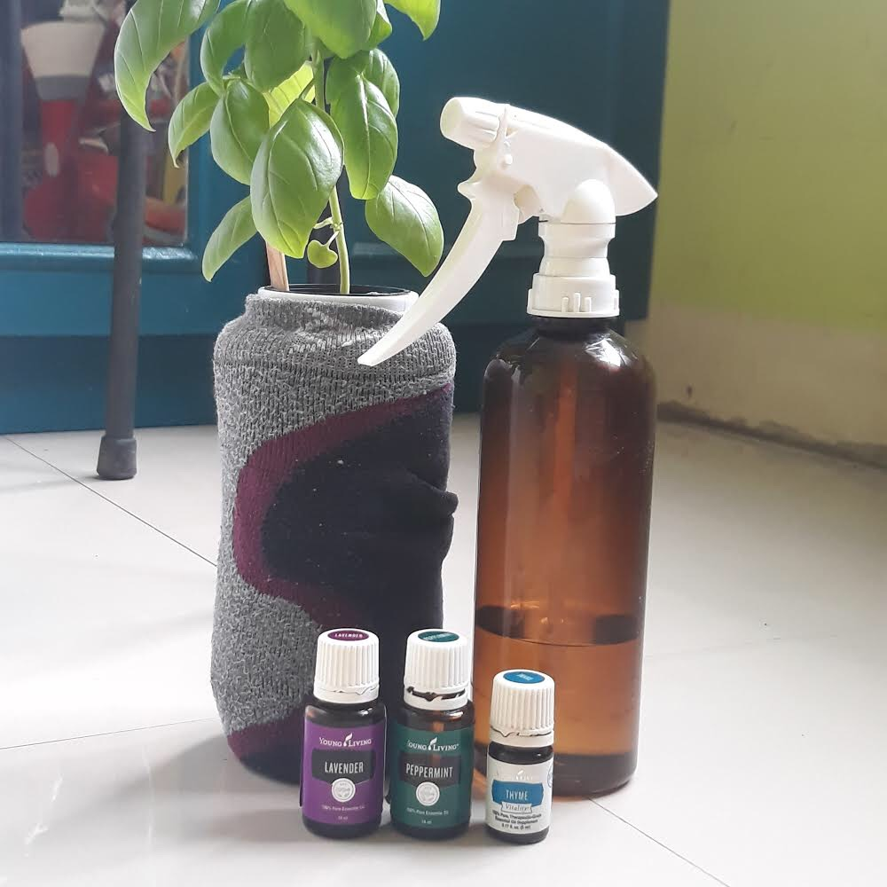 essential oils to help protect plants from pests