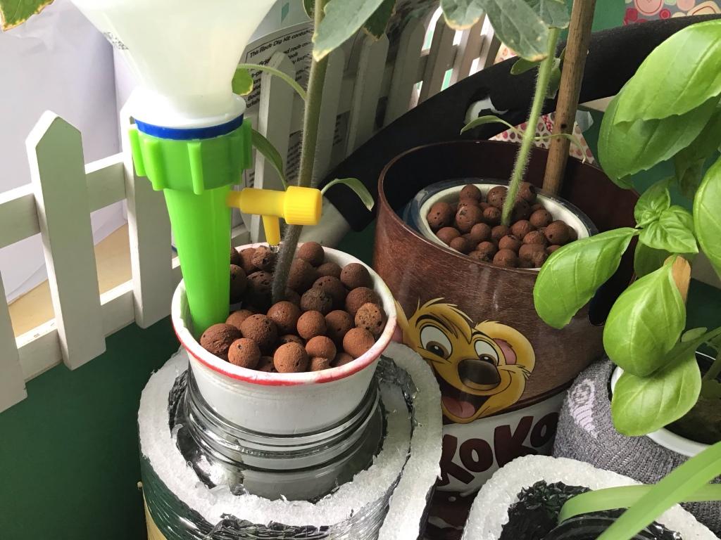 Self-watering Kratky Hydroponics set-up using watering spike