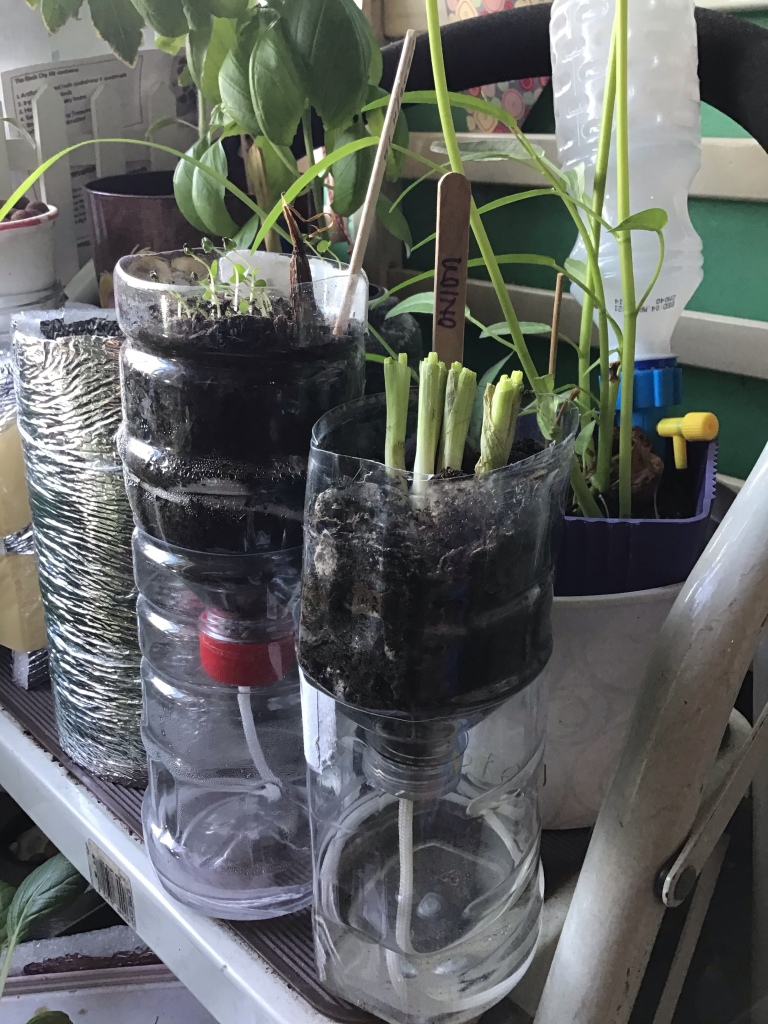 improvised self-watering planter using PET bottles