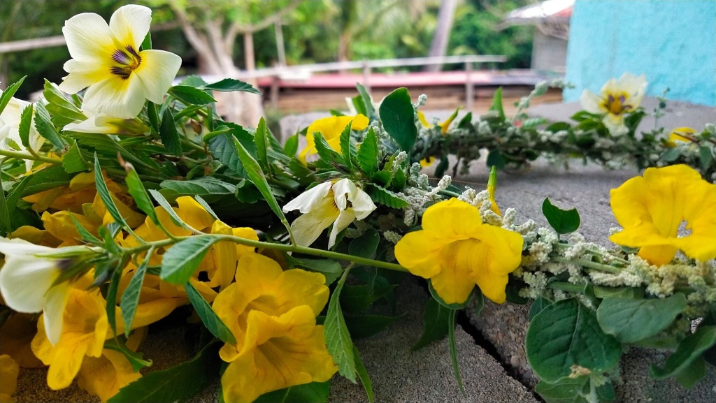 Mongpong flowering plant